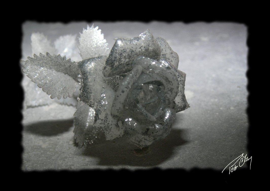 silver_rose.jpg