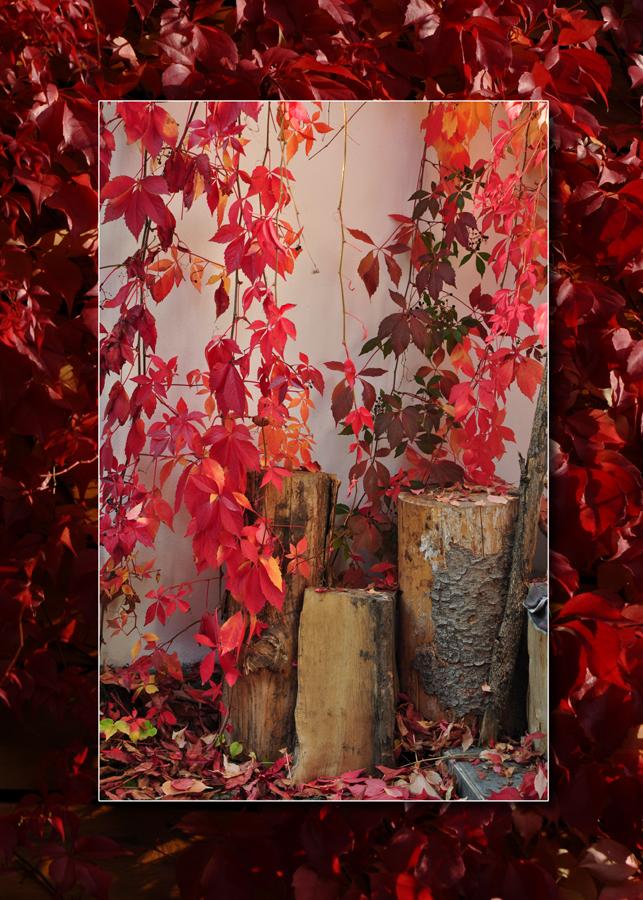 Podzimni.jpg