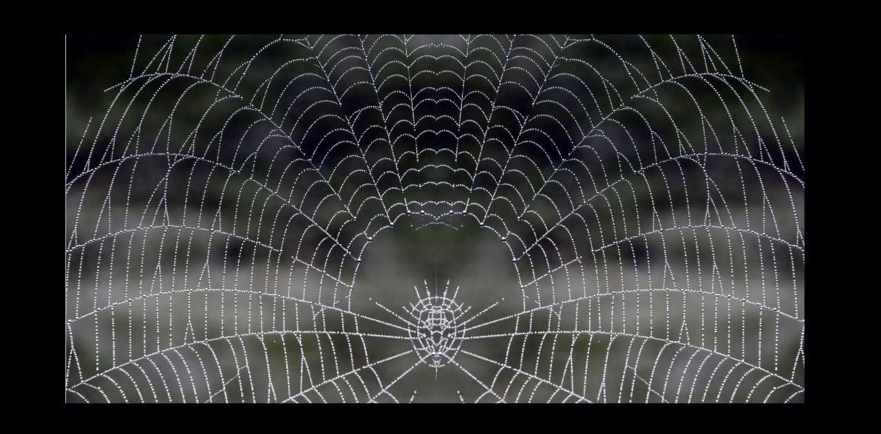 pavouci.jpg