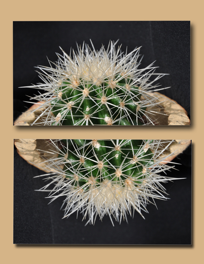 Kaktusova.jpg