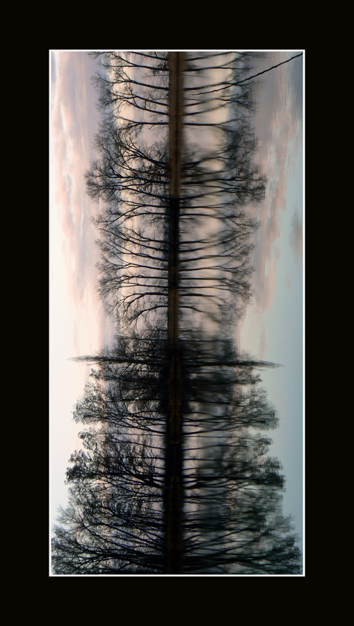 Stromzivota.jpg