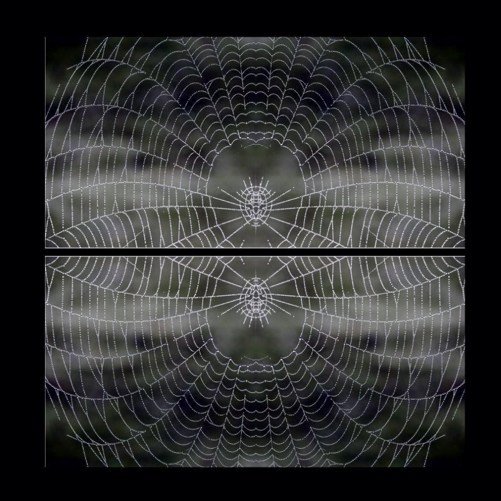 pavouci_1.jpg