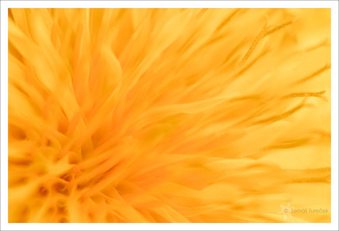 Meadow_Sun.jpg